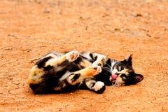 Gatto multicolore Immagine Stock Libera da Diritti