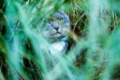 Gatto nascosto fotografia stock libera da diritti
