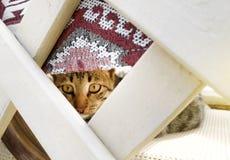 Gatto nascosto e sguardi fuori fotografia stock libera da diritti