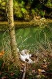 Gatto in natura Fotografie Stock Libere da Diritti