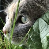 Gatto in natura fotografia stock