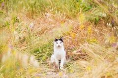 Gatto nel campo con i fiori selvaggi Fotografie Stock