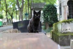 Gatto nel cimitero di Parigi Montmartre Immagine Stock Libera da Diritti