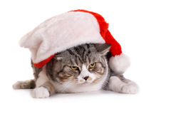 Gatto nel copricapo del Babbo Natale Immagine Stock