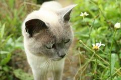 Gatto nel giardino Immagine Stock