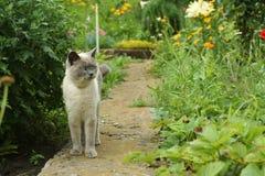 Gatto nel giardino fotografia stock libera da diritti