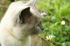 Gatto nel giardino Immagini Stock