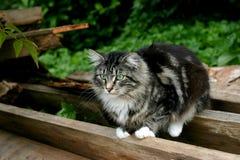Gatto nel giardino Fotografia Stock