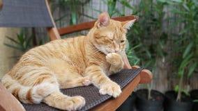 Gatto nel giardino domestico Fotografia Stock Libera da Diritti