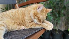 Gatto nel giardino domestico Immagini Stock