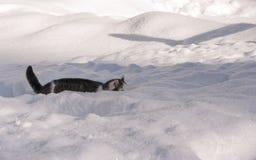 Gatto nel paesaggio di inverno Fotografia Stock