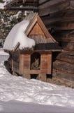 Gatto nel paesaggio di inverno Fotografia Stock Libera da Diritti