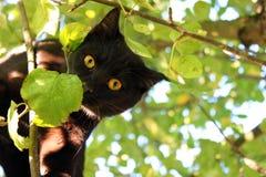 Gatto nell'albero Fotografia Stock