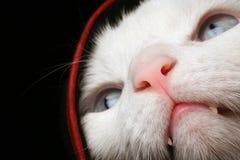 Gatto nell'ambito del coperchio, nascondentesi Fotografia Stock