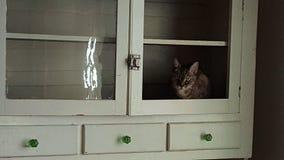 Gatto nell'armadietto Fotografie Stock Libere da Diritti