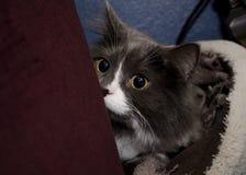 Gatto nell'attesa Fotografia Stock