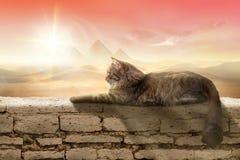 Gatto nell'Egitto fotografia stock