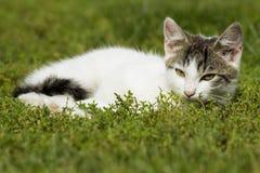 Gatto nell'erba Immagini Stock