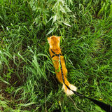 Gatto nell'erba Immagine Stock