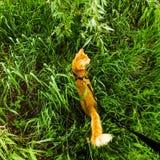 Gatto nell'erba Fotografie Stock