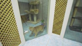 Gatto nell'hotel dell'animale domestico stock footage