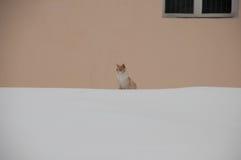 Gatto nell'inverno su neve Immagine Stock Libera da Diritti