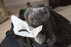 Gatto nella borsa Fotografia Stock