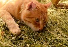 Gatto nella campagna fotografia stock