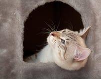 Gatto nella casa. immagini stock