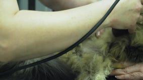 Gatto nella clinica veterinaria su esame ecografico video d archivio
