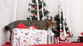 Gatto nella decorazione di Natale stock footage