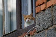 Gatto nella finestra Fotografia Stock Libera da Diritti