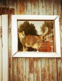 Gatto nella finestra di vecchia casa rustica immagine stock