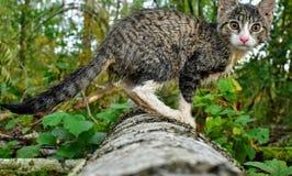 Gatto nella foresta Immagini Stock Libere da Diritti