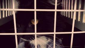 Gatto nella gabbia Immagine Stock
