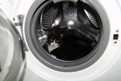 Gatto nella lavatrice Fotografie Stock