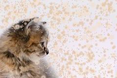 gatto nella neve, fiocchi di neve volanti Fotografia Stock