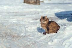 Gatto nella neve nell'inverno fotografia stock