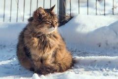 Gatto nella neve nell'inverno fotografia stock libera da diritti