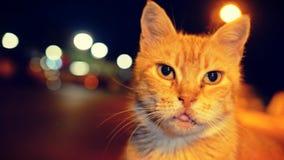 Gatto nella notte Fotografia Stock Libera da Diritti