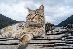 Gatto nella Patagonia, Argentina Fotografie Stock