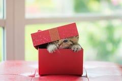 Gatto nella scatola Fotografie Stock Libere da Diritti