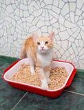 Gatto nella toilette Fotografia Stock
