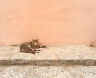 Gatto nella via Immagine Stock