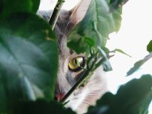 Gatto nelle foglie fotografia stock