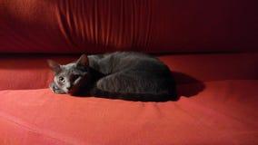 Gatto nello scuro Immagine Stock