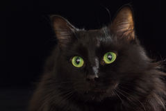 Gatto nero. Fotografia Stock
