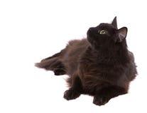 Gatto nero Immagine Stock Libera da Diritti