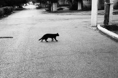 Gatto nero Fotografia Stock