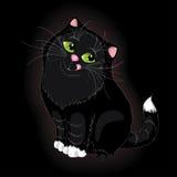 Gatto nero Immagine Stock